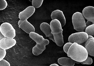 Изоконазол крем свойства от грибков рода Malassezia