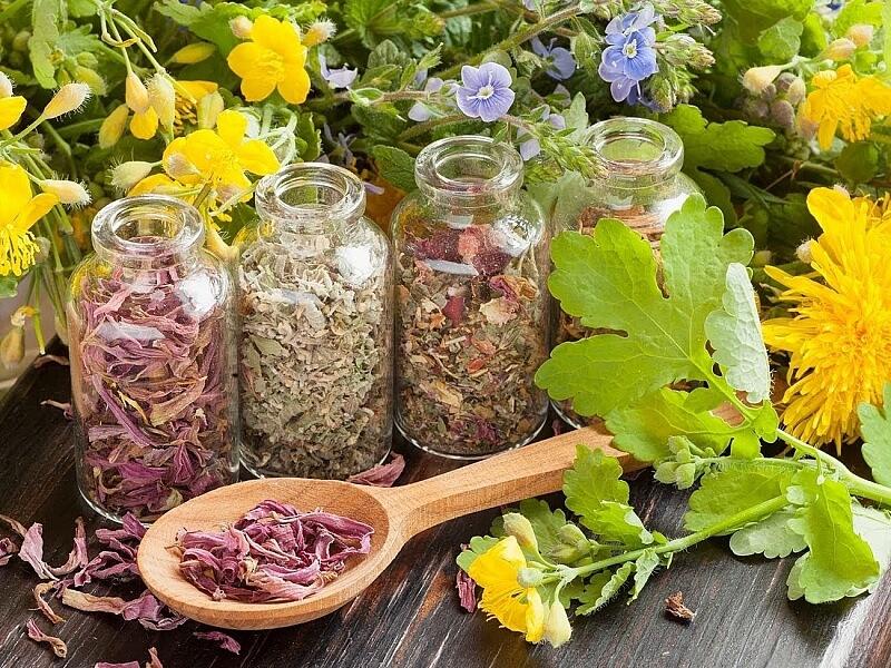 Лечение фурункулов народными средствами травы